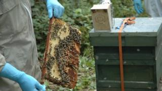 Bees at the national centre are being fed sugar to avoid starvation