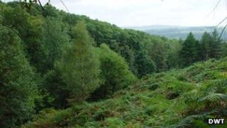 Milkwellburn Wood nature reserve