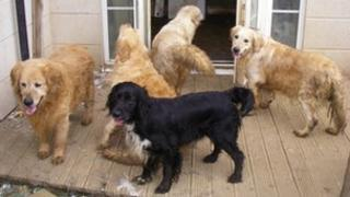 Dogs found by RSPCA in Ipswich