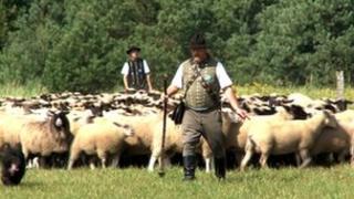 German shepherds/flock