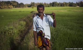 A farmer poses in the rice paddy where he works near Anuradhapura