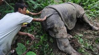 Villagers look at a wounded one-horned rhinoceros that was shot and dehorned by poachers in Parku hills, near Kaziranga National Park, about 250 kilometers (156 miles) east of Gauhati, India, Wednesday, Sept. 26, 2012