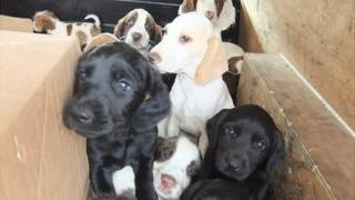The puppies were found in boxes in the back of two cars
