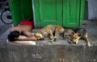 An Indian man sleeps with stray dogs in Kolkata, India, Wednesday, Oct. 17, 2012