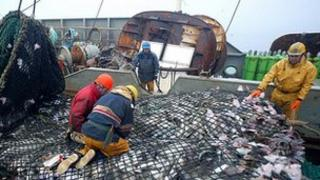 French trawler with cod catch - file pic