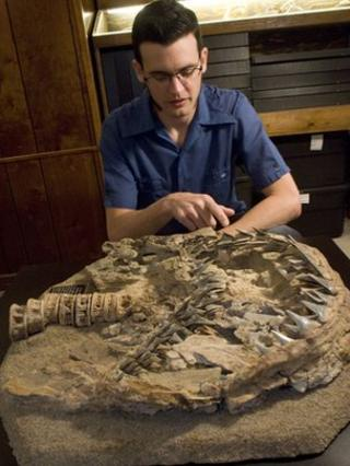 Shark fossil