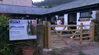 Horse rescue centre