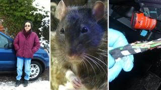 Jill Delaney and damage caused by rats to car's electrics