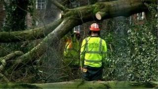 Tree felling in Alexandra Park, Whalley Range