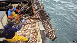 Scallop fishing off northern France - file pic