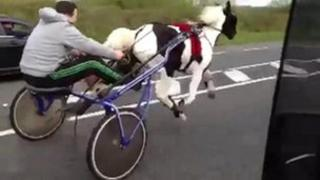 Horse and buggy racing on main road