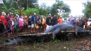 A 21ft (6.4m) saltwater crocodile, which is suspected of having attacked several people, after it was caught in Nueva Era in Bunawan town, Agusan del Sur, southern Philippines on 4 September 2011