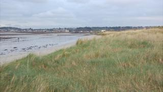 Vazon sand dunes covered in maram grass