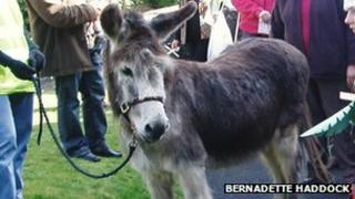 Wonkey the donkey at Palm Sunday service