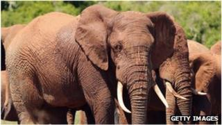 The latest reports indicate that the illicit trade in ivory has doubled since 2007