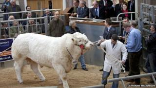 Vexour Garth in the ring at auction