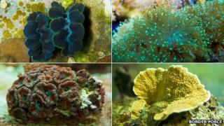 Corals illegally smuggled into UK