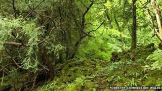 An ancient woodland
