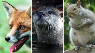 Fox, otter, squirel