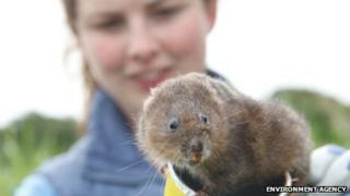 Dani Siddall with water vole