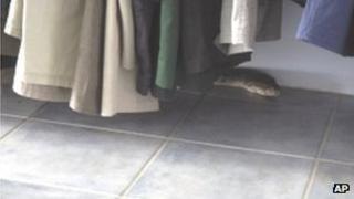 Python found in charity shop