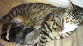 Cat and 'missing' kittens