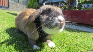 Rabbit Olivia