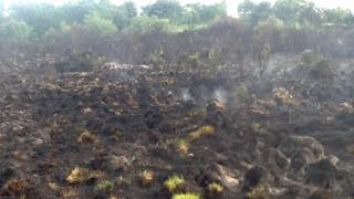 Scene of fire at Chobham Common