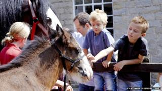 Children pet a horse