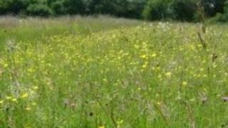 Meadow Farm near Blackthorn