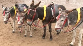 Donkeys on Cleethorpes beach