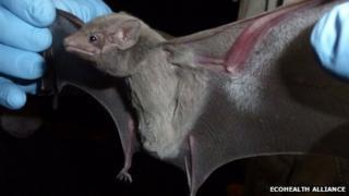 Egyptian tomb bat