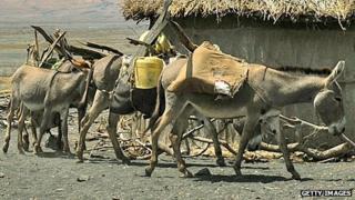Donkeys in the Rift Valley