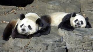 Tian Tian and Yang Guang