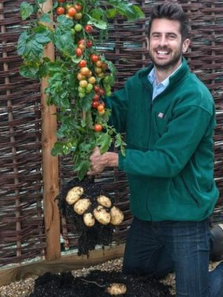 Michael Perry, of Thompson and Morgan, holding a TomTato plant