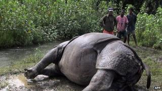 Forest workers look at a dead rhinoceros in southern Nepal 31 July 2006
