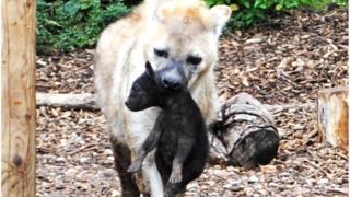 Kalabi at Colchester Zoo