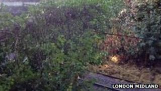 Fallen tree in Canley