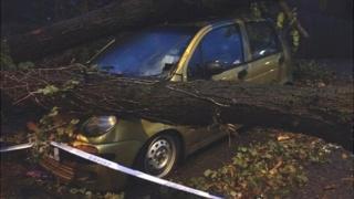 Fallen tree in Salisbury