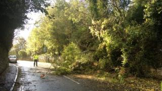 A tree came down onto Entry Hill in Bath blocking the road