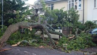 A fallen tree limb crushing three cars