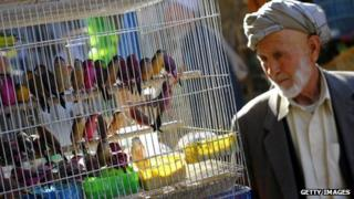 A man looks at birds in cage at a market in Kabul in August 2012.