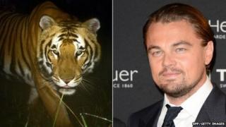 Tiger/Leonardo DiCaprio