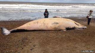 Whale on beach in Cromer