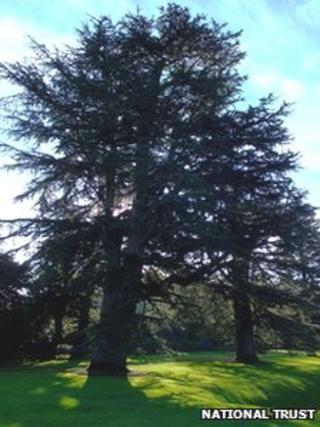 Duke of Wellington tree