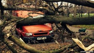 Tree falls on van