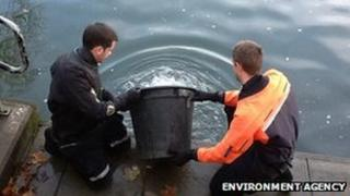 Fish returned to River Thames after rescue