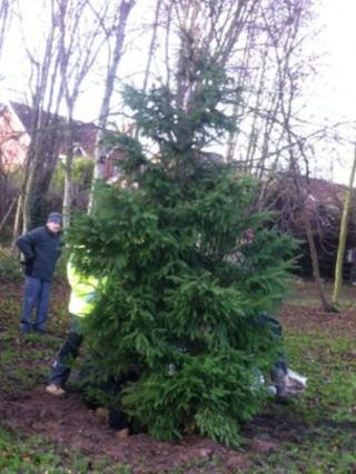 Bilsthorpe Christmas tree