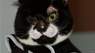 Robbie the cat