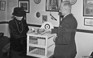 Spy pigeon Winkie gets the Dickin medal